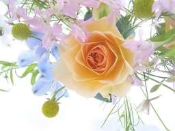 Flowers_-_a_spring_bouquet_with_a_rose.jpg
